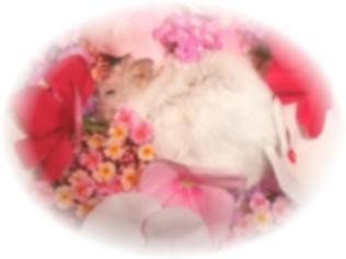 ノンナ永眠。2歳4ヶ月6日