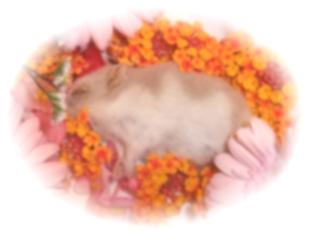 エルサ永眠1歳7ヶ月0日