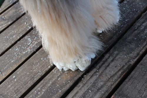 レオンの足