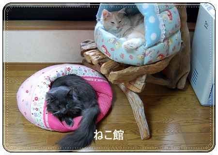 blog6_20151120101317a0a.jpg