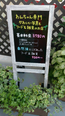 DSC_4602.jpg