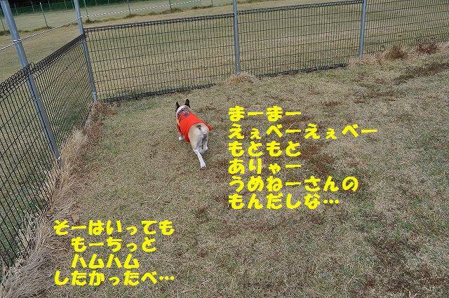 DSC_0006_20151106153040964.jpg