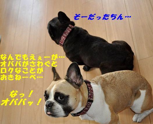 DSC_0009_20151029152822e02.jpg