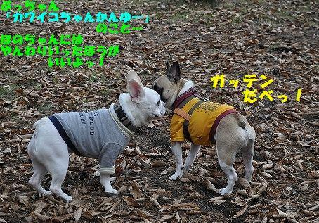 DSC_0009_20151111105050df5.jpg