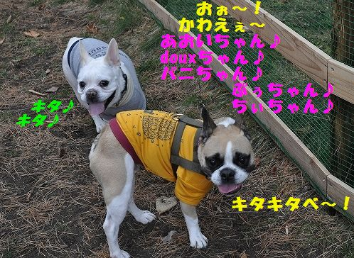 DSC_0018_20151111105052157.jpg