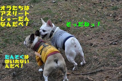 DSC_0019_2015111214304880a.jpg