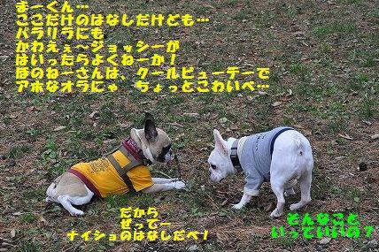 DSC_0025_2015111110315271c.jpg