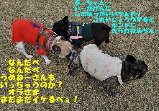 DSC_0028_20151106095721689.jpg