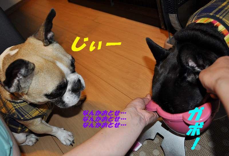 DSC_0048_201510060956156d4.jpg