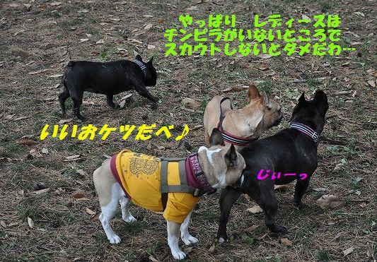 DSC_0062_20151110174316d9e.jpg