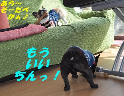 DSC_0062_20151119135026f4d.jpg