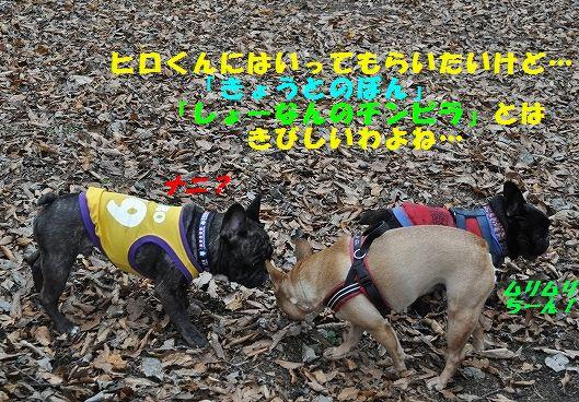 DSC_0079_20151111105054134.jpg