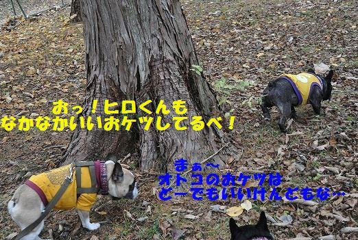 DSC_0101_201511101743182e7.jpg