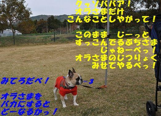 DSC_0109_20151104134809ddd.jpg