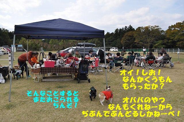 DSC_0110_2015110413333136f.jpg
