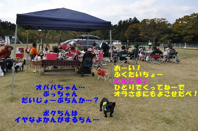 DSC_0111_20151104134811763.jpg