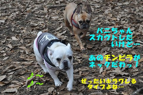 DSC_0117_20151110172324e87.jpg