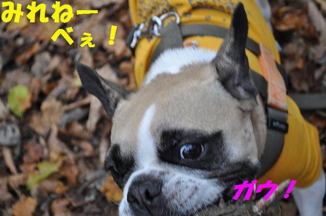 DSC_0123_20151110134102edd.jpg