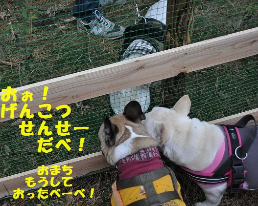 DSC_0132_201511131336539a4.jpg