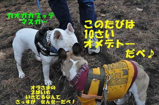 DSC_0135_2015111313365650a.jpg
