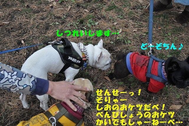 DSC_0138_20151113133727d09.jpg
