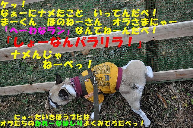DSC_0140_20151110142609ca4.jpg