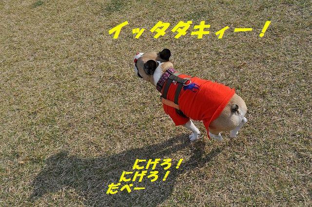 DSC_0152_2015110613345583a.jpg