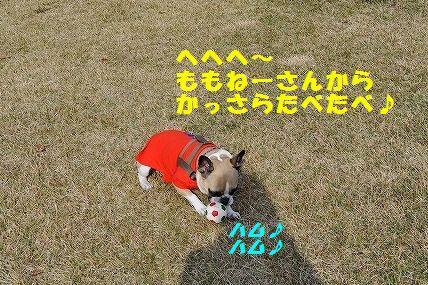 DSC_0153_20151106133456e41.jpg
