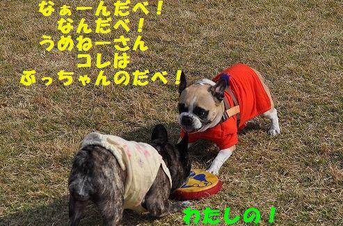 DSC_0166_20151106135315bdb.jpg