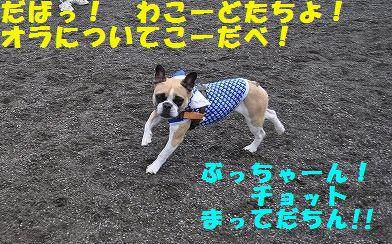 DSC_0218_201510141308545b9.jpg