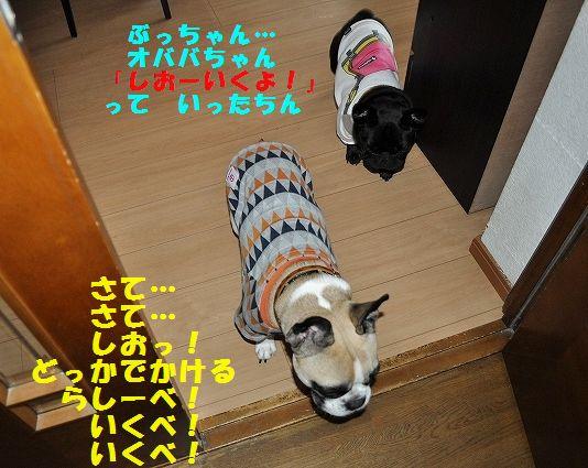 DSC_0219_201511161133448a0.jpg