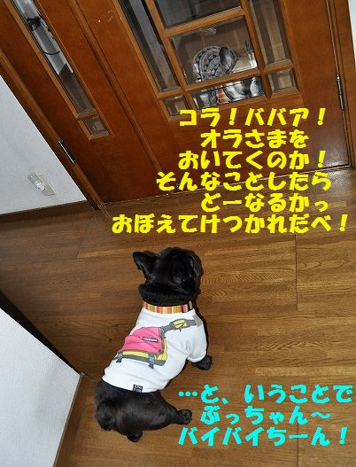 DSC_0222_20151116113346808.jpg