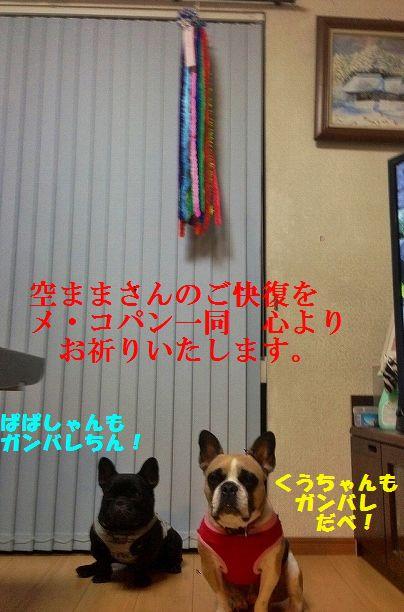 IMG_2453.jpg