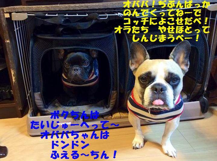 IMG_4007.jpg