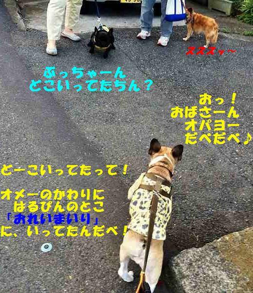 IMG_7409_20150924155945690.jpg