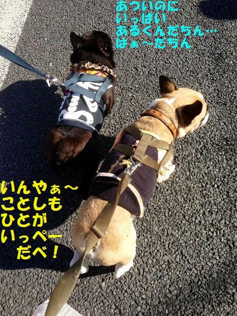 IMG_8269_20151021144647ff1.jpg