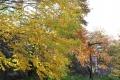 秋の旅行13