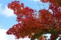秋の旅行11