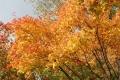 秋の旅行18