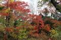 秋の旅行17