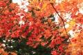 ままぎゅう秋2