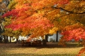 ままぎゅう秋1
