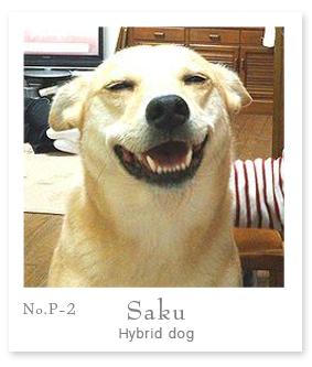 PrincipalSaku.jpg