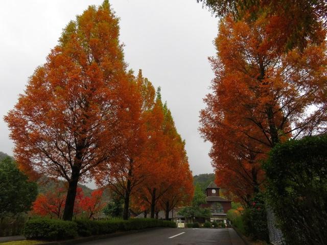 紅葉並木①640