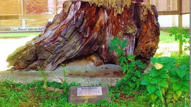箱根神代杉 (640x360)