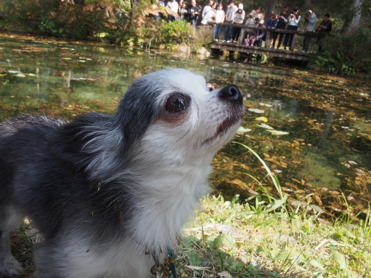 モネの池ぴぃ