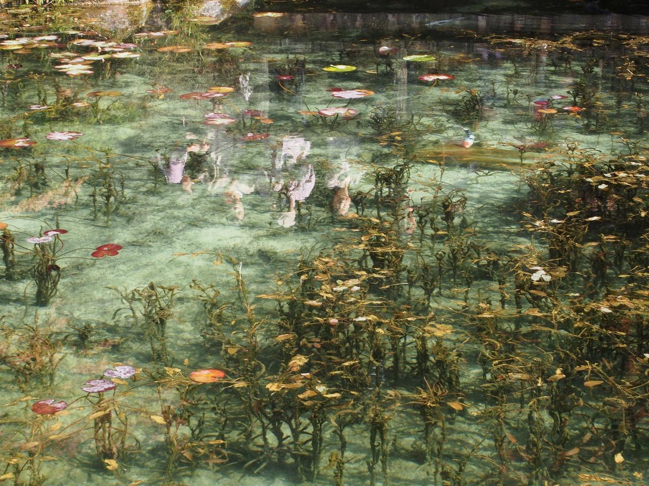モネの池幽霊家族