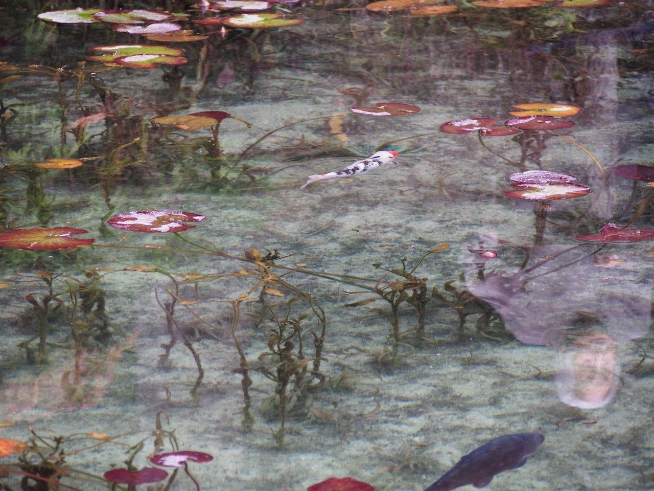 モネの池幽霊