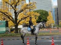 警視庁騎馬部