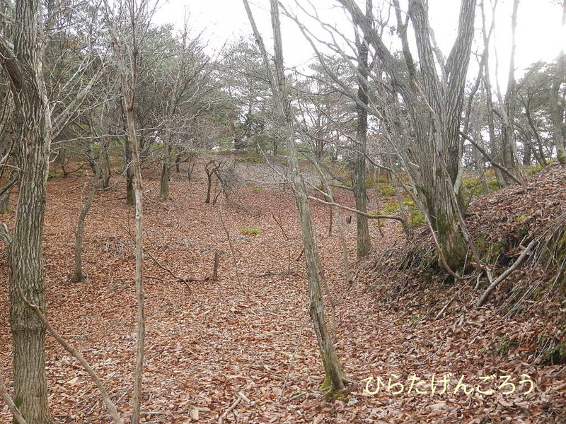forest②